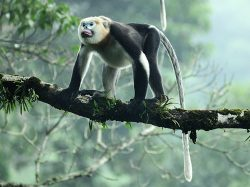 The page displays a Tonkin Snub-Nosed Monkey in a story that reduces stress.