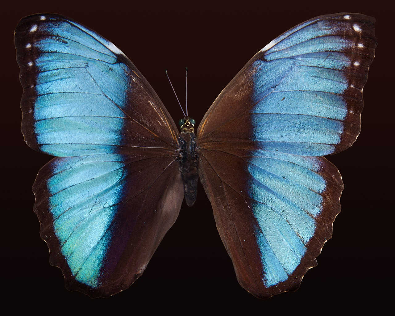 Image of a Butterfly which is an analogy for the Hierarchy of Social Development
